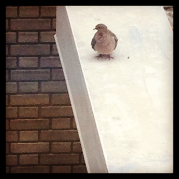 A pigeon at City Hall.
