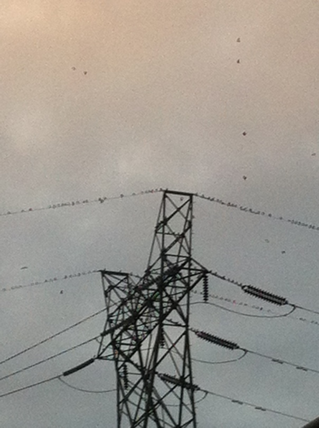 Birds alighting on transformer wires.