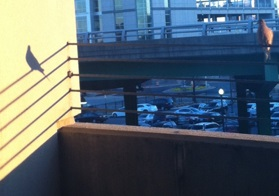 A bird looking at its shadow in the River Market parking deck.
