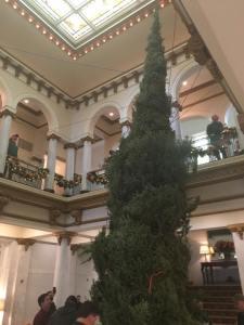 2016-cap-hotel-tree